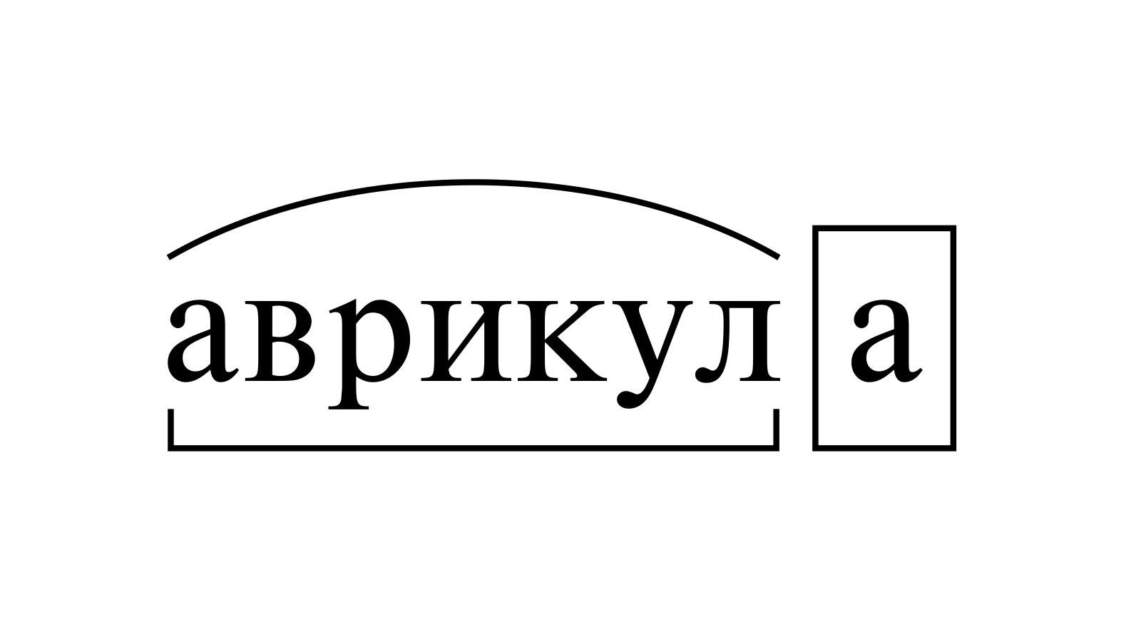Разбор слова «аврикула» по составу