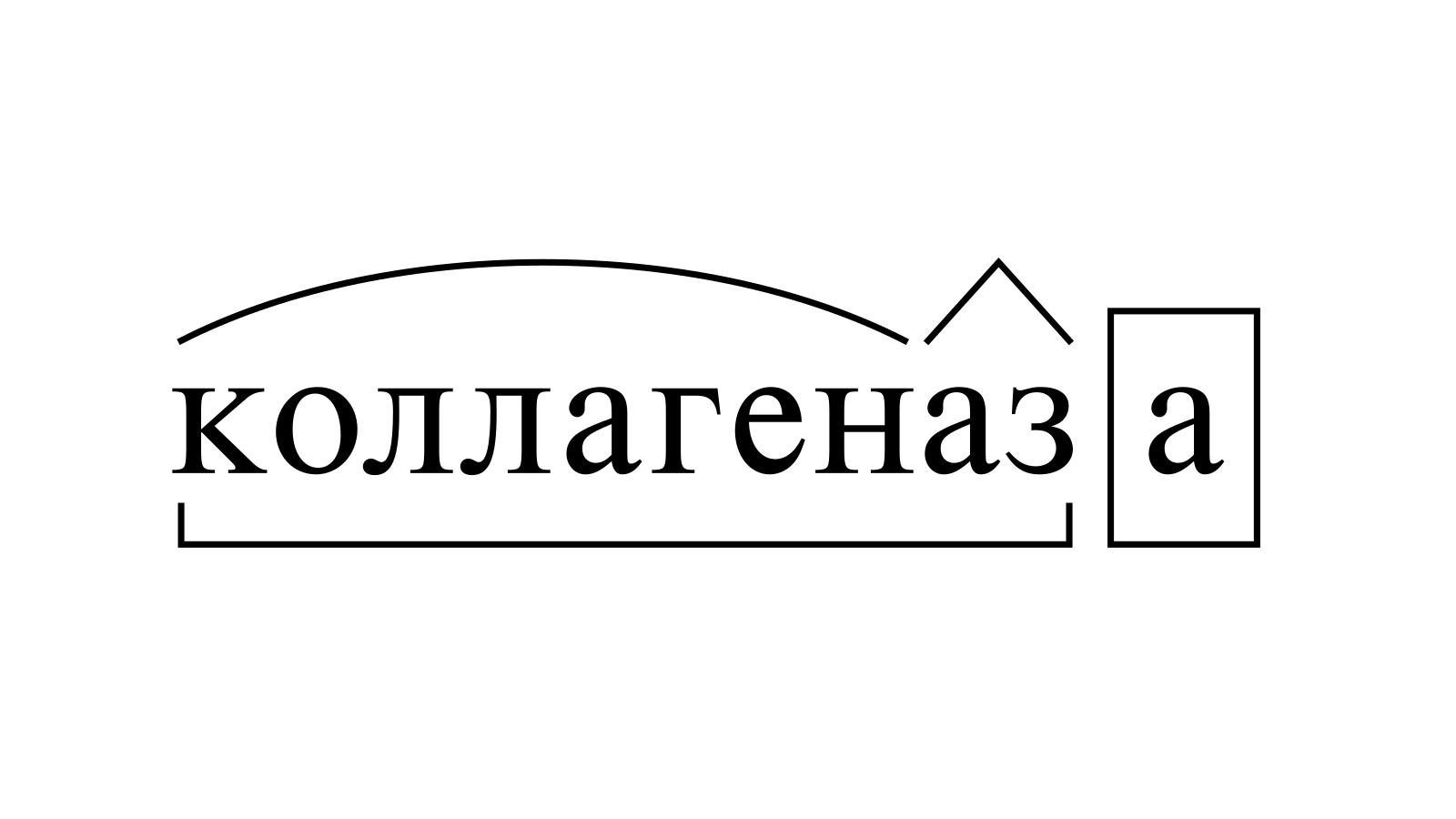 Разбор слова «коллагеназа» по составу