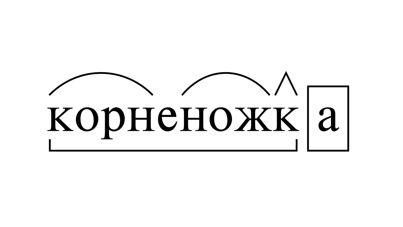 Разбор слова «корненожка» по составу
