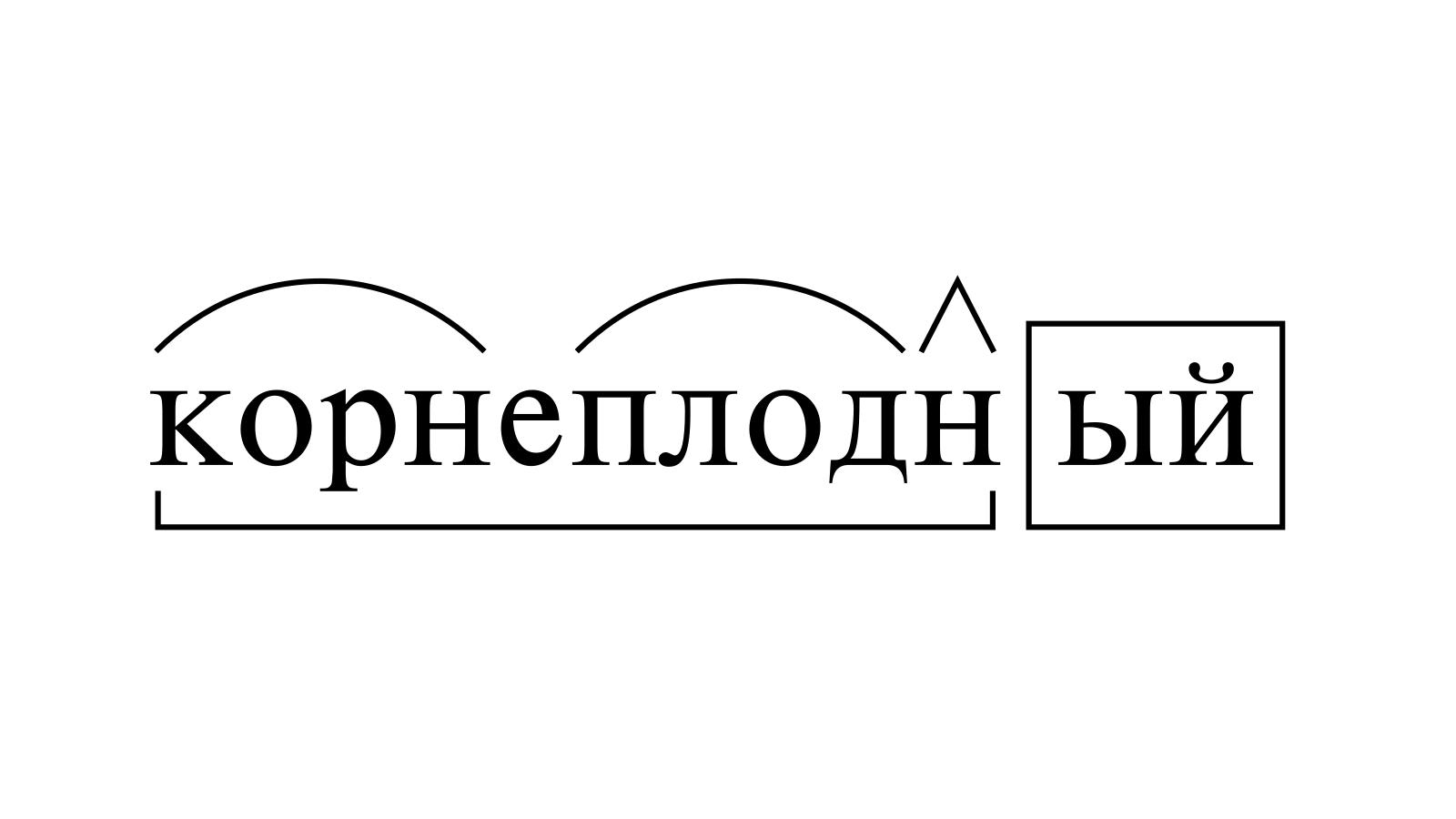 Разбор слова «корнеплодный» по составу