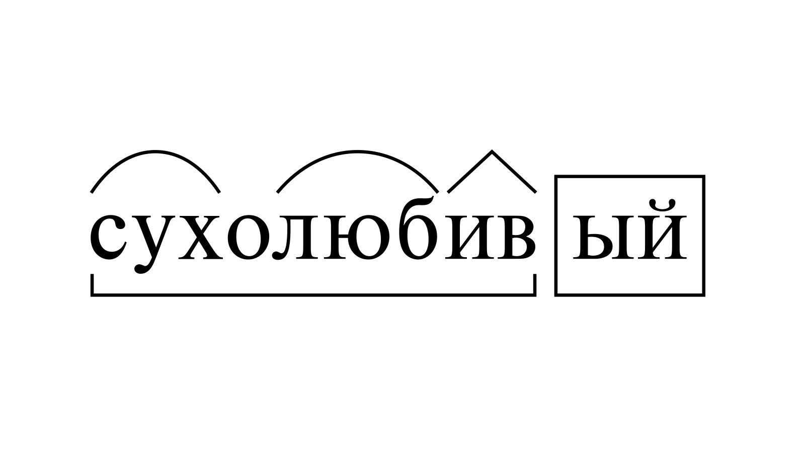Разбор слова «сухолюбивый» по составу