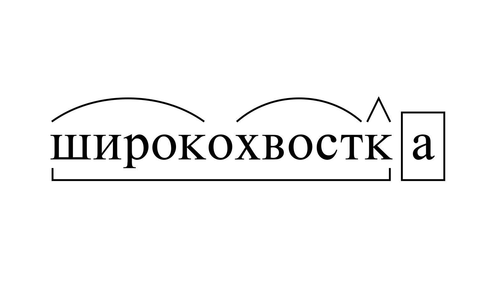 Разбор слова «широкохвостка» по составу