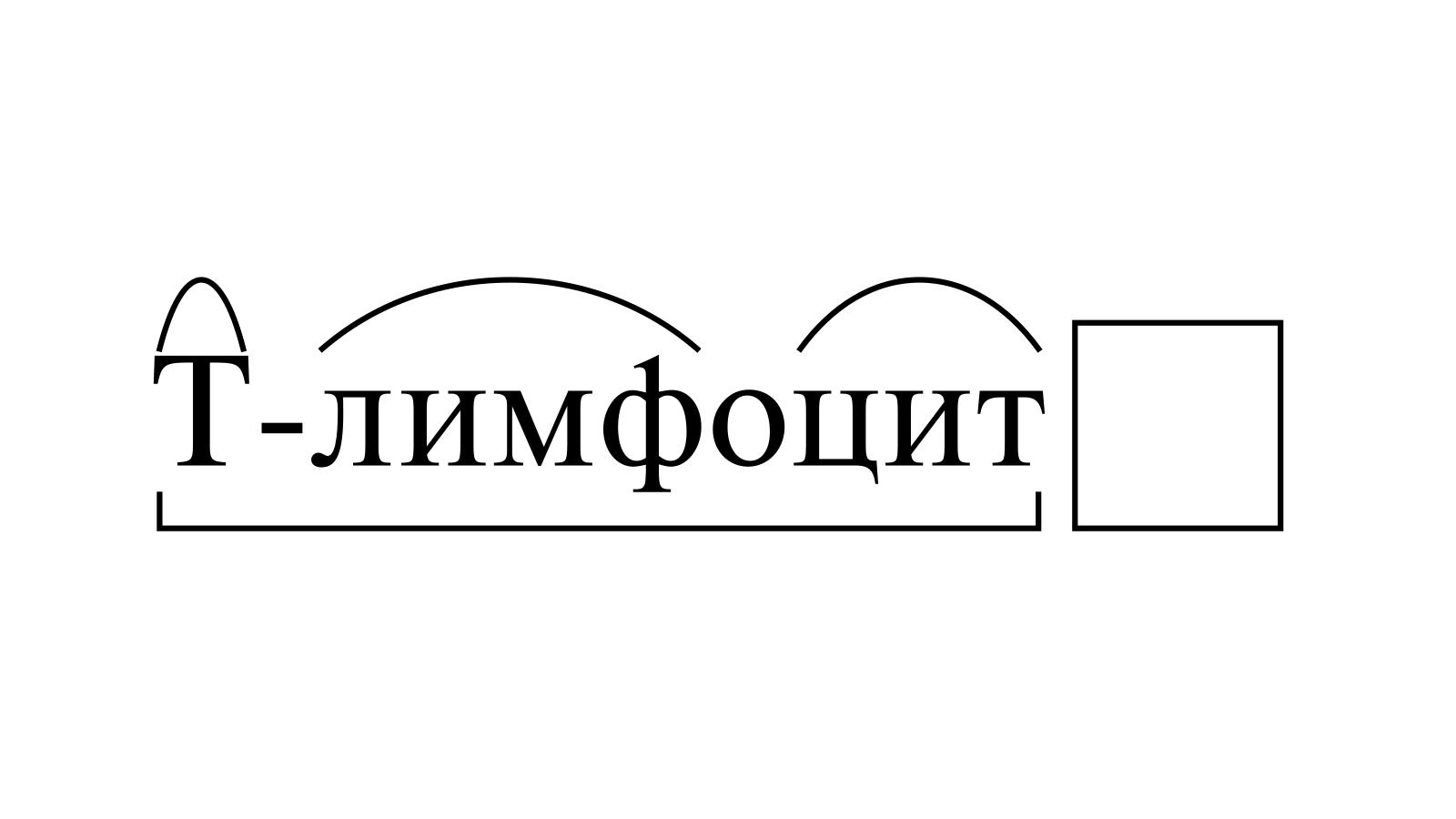 Разбор слова «T-лимфоцит» по составу